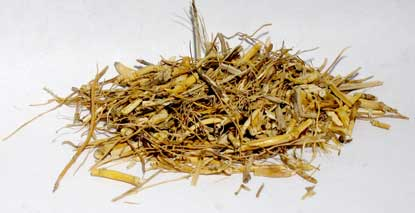 Witches Grass cut 1oz 1618 gold